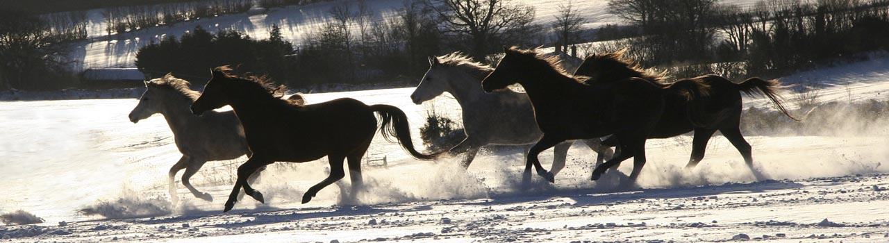 mares galloping in snow